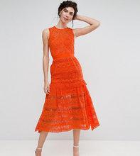 True Decadence | Кружевное приталенное платье миди для выпускного True Decadence Tall | Clouty